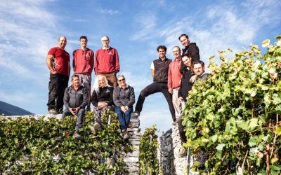 The vineyard team